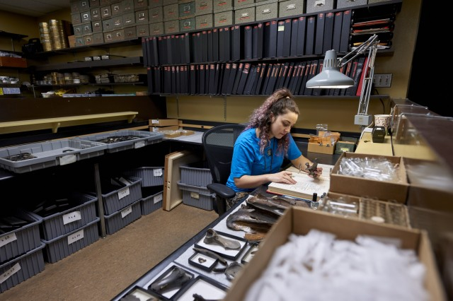 volunteer working in fossil lab at tar pits