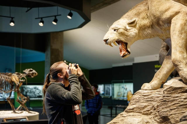 guest taking picture of sabertooth exhibit tar pits interior