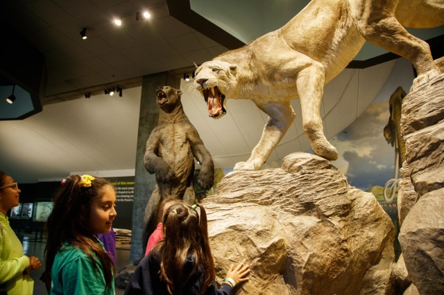 kids interacting sabertooth exhibit mammoths and mastodons la brea tar pits