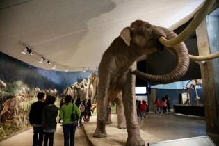 mammoth exhibit tar pits mammoths and mastodons