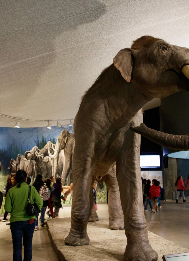 Visitors walking around La Brea Tar Pits museum and admiring the Mammoths and Mastodons displays