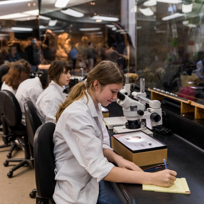 Teens helping out in the Fossil Lab as part of La Brea Tar Pits Teen Program