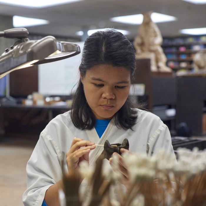 Volunteer in Fossil Lab at La Brea Tar Pits