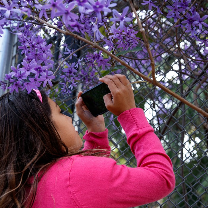 Girl observing a flowering tree up-close