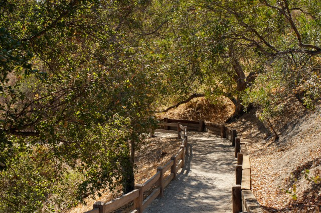 hart ranch trees pathway oak