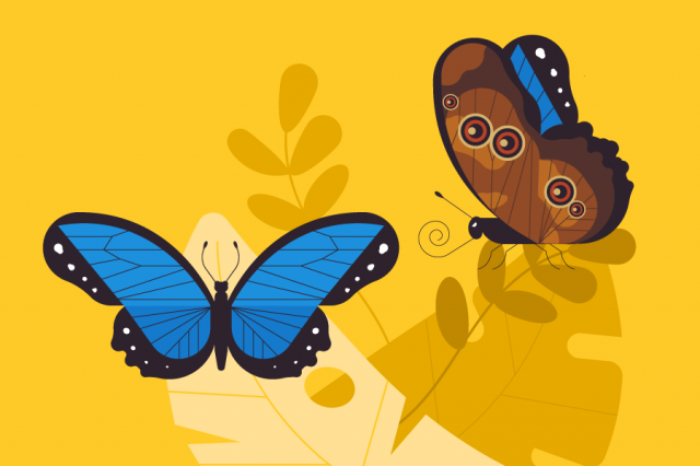 illustration of two butterflies on yellow background