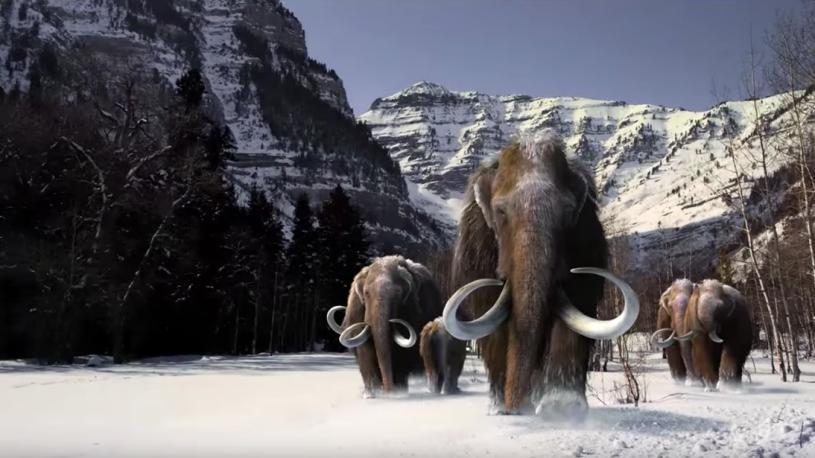 Image of mammoths