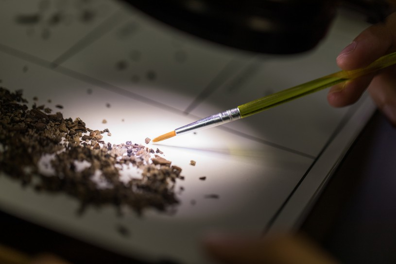 Photo of microfossils being sorted in the Tar Pits micro lab