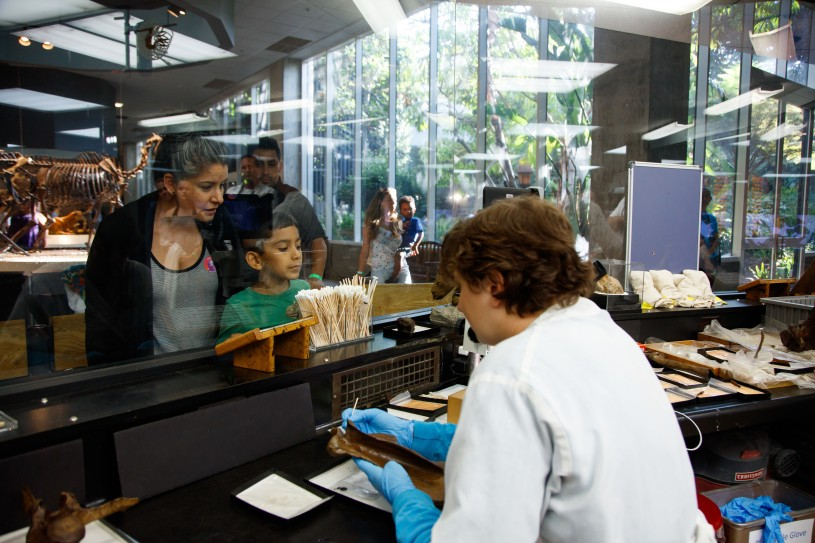 Onlookers watch scientists in the Fossil Lab