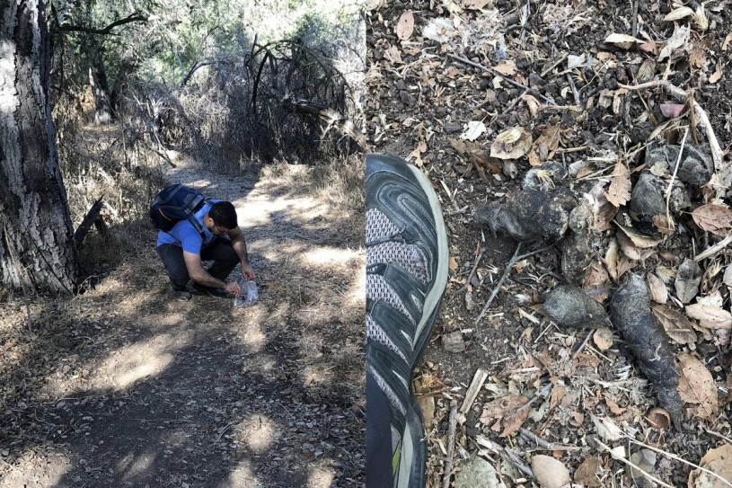 Me collecting scat (that I kept in my freezer). Photoby my extremely supportive and patient wife, Keymi Ordeñana.