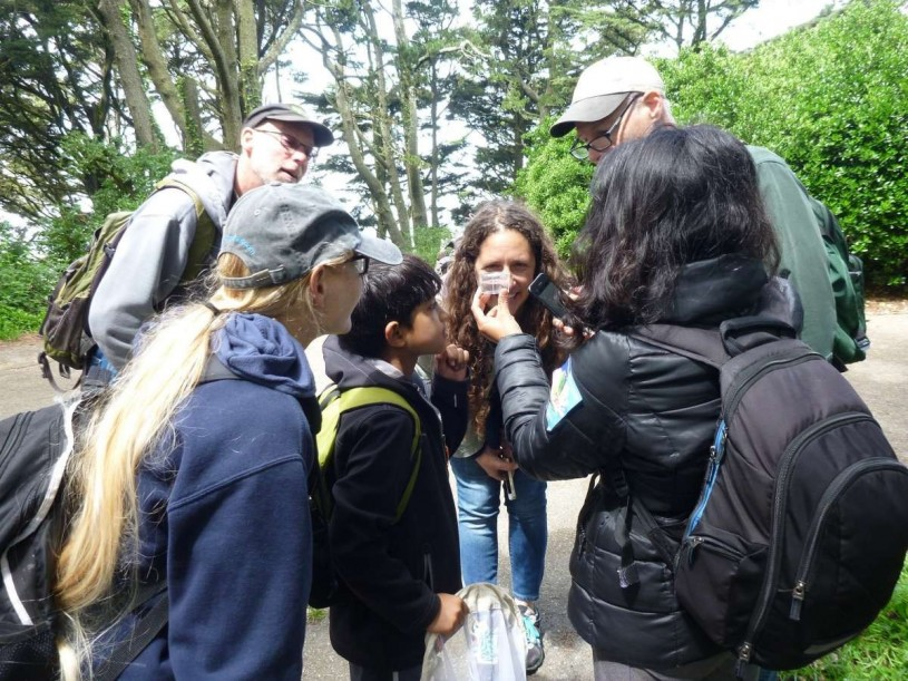 Community scientists checking out an insect found during a bioblitz in San Francisco