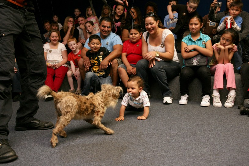 Nibbles the small Saber-Toothed Cat puppet during Tar Pits Ice Age Encounters Show