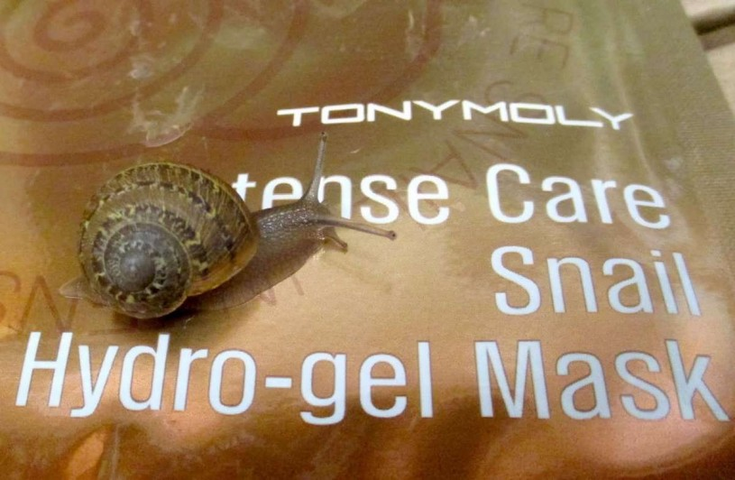 "Tonymoly Intense Care Snail Hydro-gel Mask with its ""creator,"" Cornu aspersum."