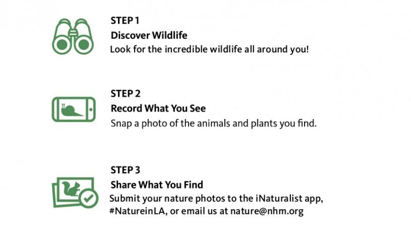 Nature Hunt Steps