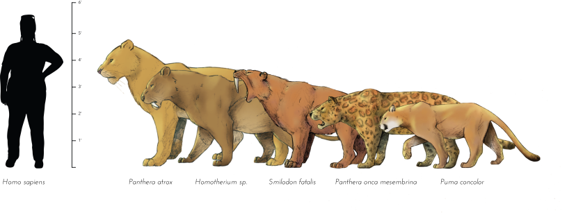 Five Big Cats at La Brea