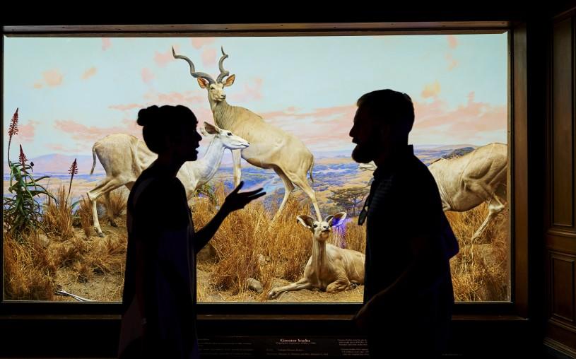 CROPPED Visitors discuss the greater kudu diorama NHM