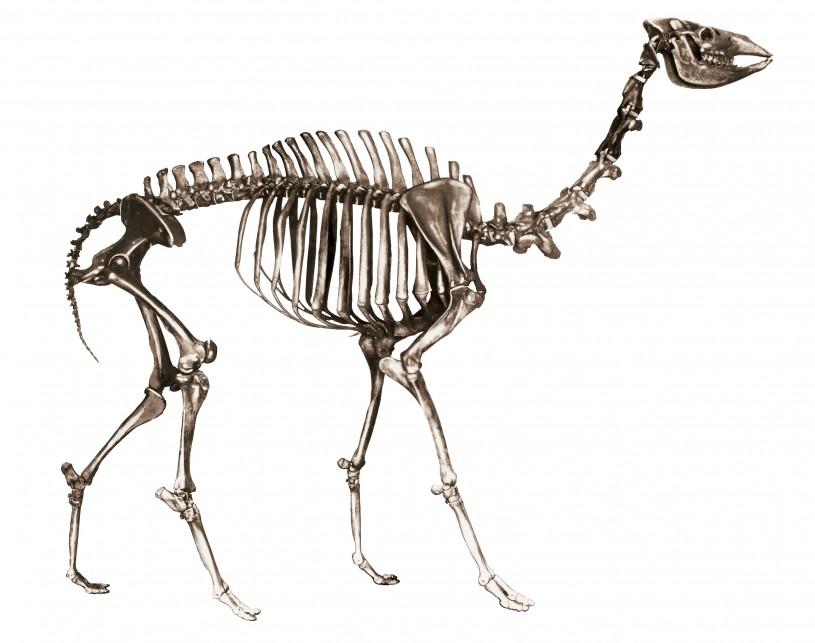 yesterday's camel