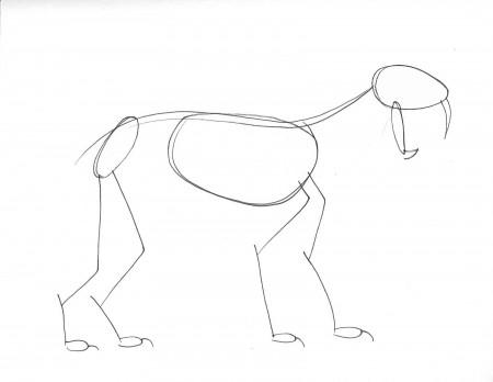 Gesture drawing of saber-toothed cat skeleton