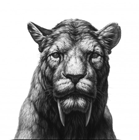 Black and white illustration of a sabertoothed cat